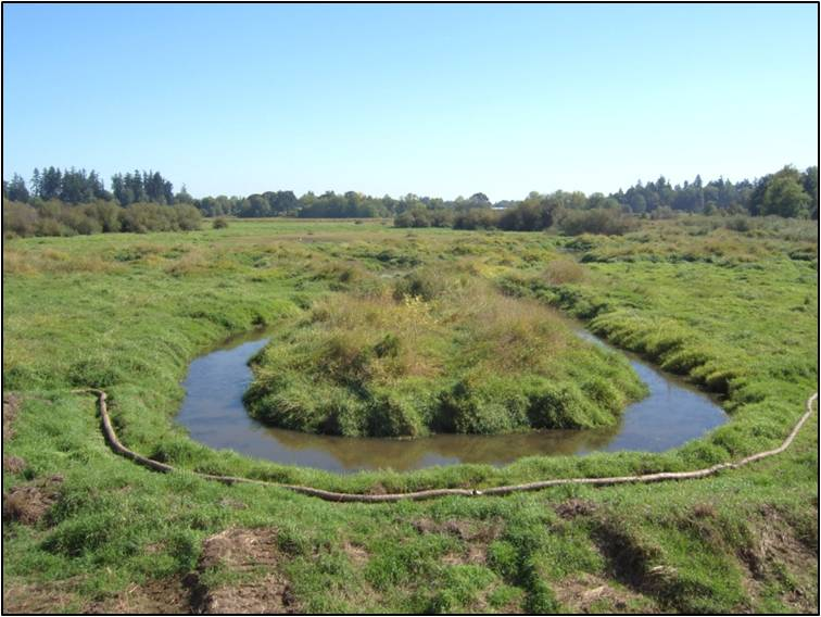 JB Restoration- Wapato Marsh Before 2